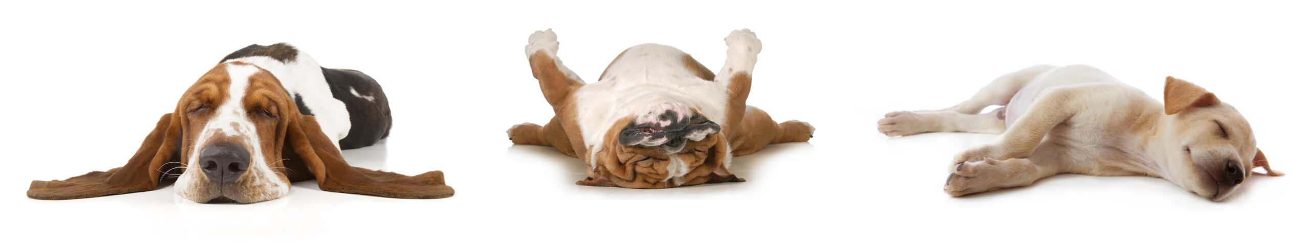 Sleep | Dog beds handmade in the UK